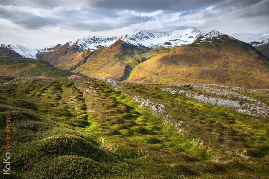 KoKoWorld-Arctic-Polygon-Hammock.jpg