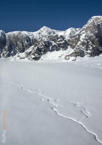KoKoWorld-Arctic-Ruths-Ice.jpg