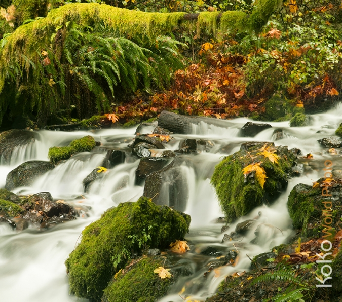 koko-world-Fairy-Falls-Trail-b.jpg