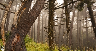 Foggy Forest Mystery