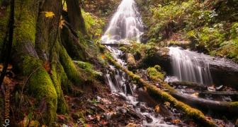 Fall in Fairymist