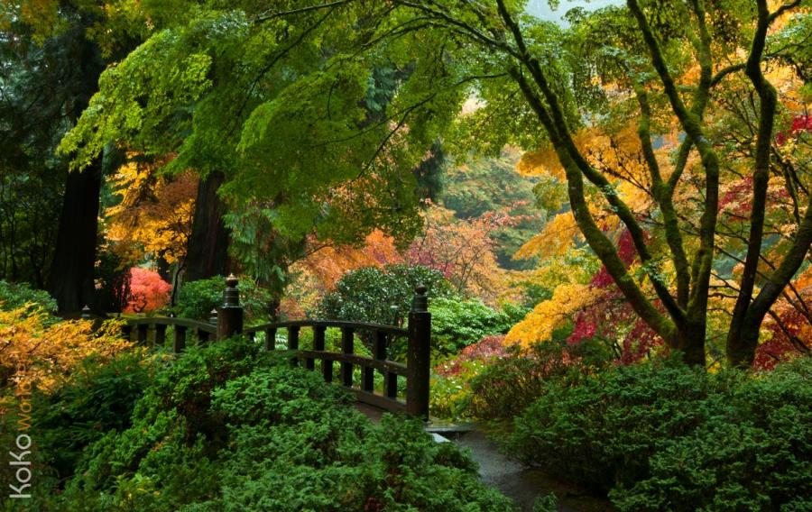 KoKoWorldPhoto_AutumnPeace.jpg
