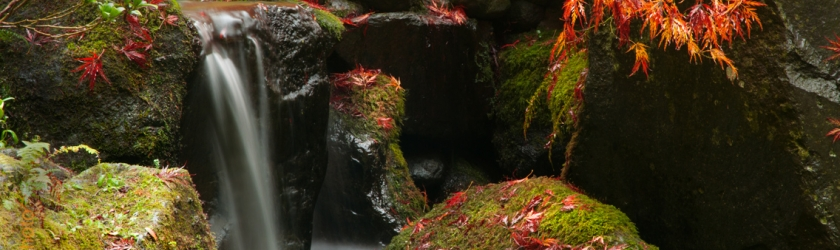 Portland Japanese Garden Selects KoKoWorld Images For Collections